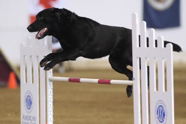 henry-2011-agility-natls