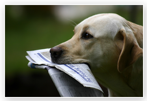 American School Of Dog Obedience Reviews